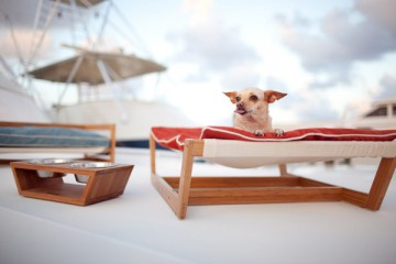 Comfortable-and-Modern-Furniture-for-Pets-with-Pampered-Idea-by-Pet-Lounge-Studios